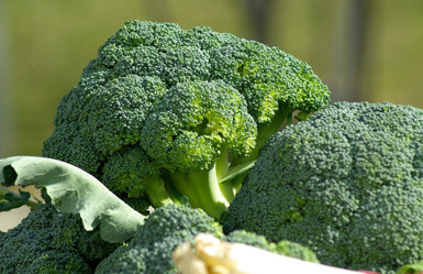 Acido folico en el embarazo: brócoli