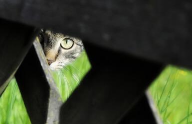 Toxoplasmosis en embarazadas: gatos